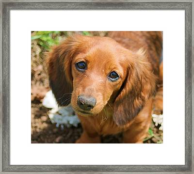 Please Take Me Home And Love Me Framed Print by Victoria Sheldon