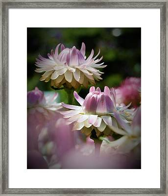 Pleasing In Pink Framed Print by Terry Atkins