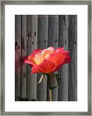 Pleasure Framed Print by Sonali Gangane