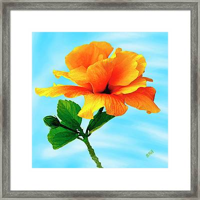 Pleasure - Yellow Double Hibiscus Framed Print by Ben and Raisa Gertsberg