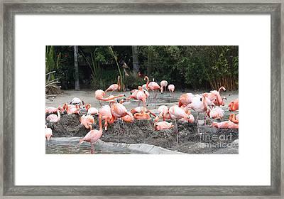 Plenty Of Pink Framed Print by John Telfer