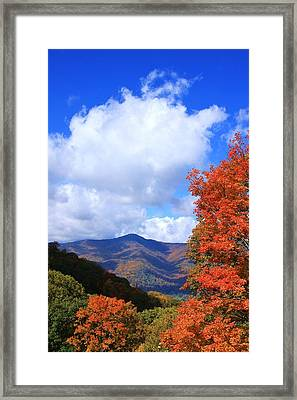 Plott Balsam Mountains Foliage Framed Print