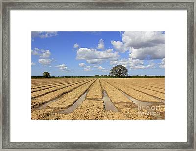 Ploughed Field Framed Print