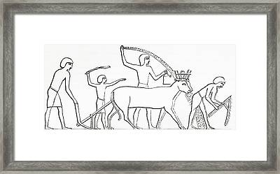 Ploughing, Hoeing And Sowing With Animals In Ancient Egypt.  From The Imperial Bible Dictionary Framed Print by Bridgeman Images