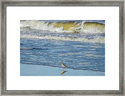 Plover Bird At Bahia Solano Beach Framed Print by Mario A Murcia L