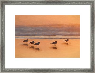 Plovers Reflecting Framed Print
