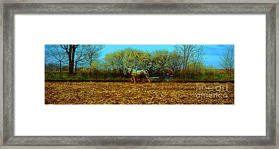 Plow Days Freeport Illinos   Framed Print