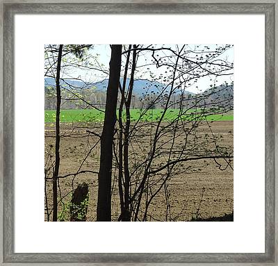 Plowed Framed Print by Catherine Arcolio