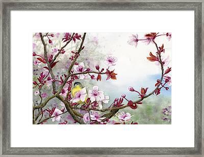 Plum Blossoms Framed Print by Karen Wright