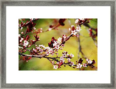 Framed Print featuring the photograph Plum Blossoms by Trina  Ansel