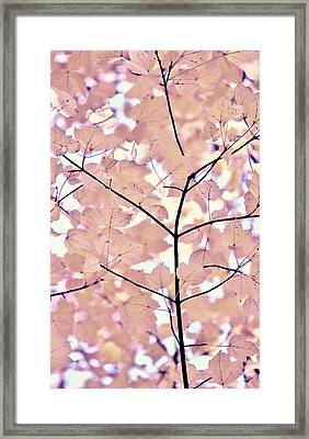 Plum Cream Leaves Melody Framed Print by Jennie Marie Schell