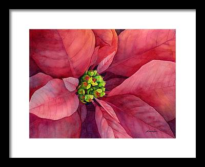 Poinsettia Framed Prints