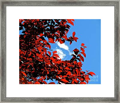 Plum Tree Cloudy Blue Sky 1 Framed Print by CML Brown