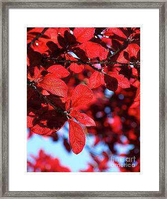 Framed Print featuring the photograph Plum Tree Cloudy Blue Sky 2 by CML Brown