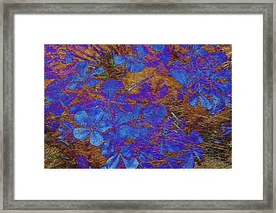 Plumbago And Gold Leaf Abstract Framed Print