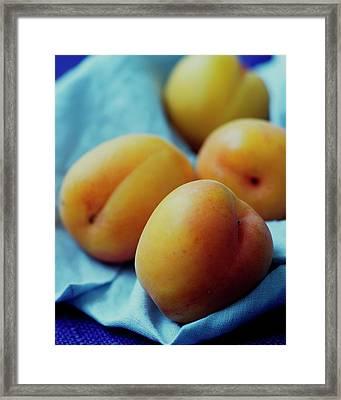 Plumcots Framed Print