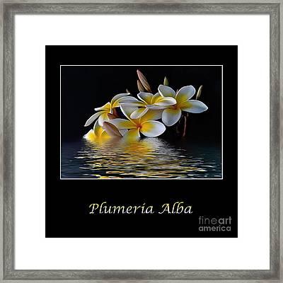 Plumeria Alba Framed Print