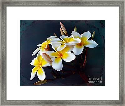 Plumeria Bouquet 2 Framed Print by Kaye Menner
