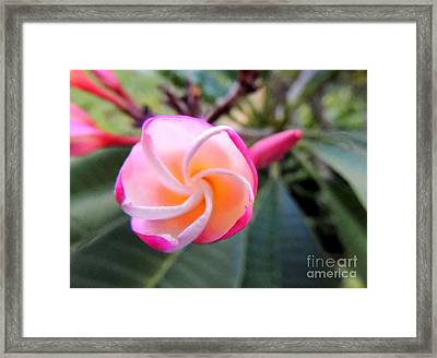 Framed Print featuring the photograph Plumeria Curve by Kristine Merc
