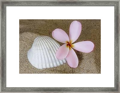 Plumeria Flower And Sea Shell Framed Print
