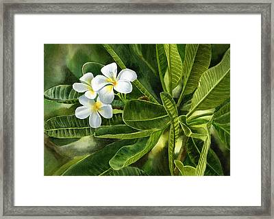 Plumeria Leaves Framed Print