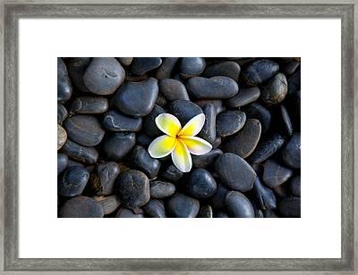Plumeria Pebbles Framed Print