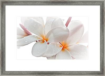 Framed Print featuring the photograph Plumeria by Roselynne Broussard