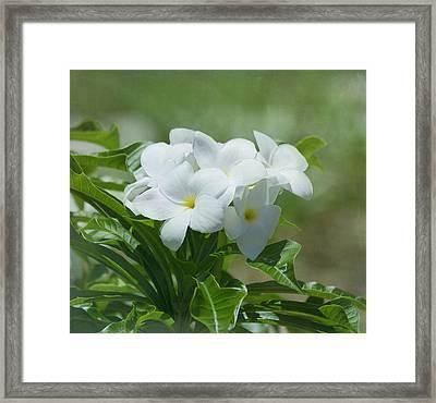 Plumeria - Tropical Flowers Framed Print