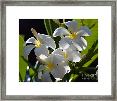 Framed Print featuring the photograph Plumeria's IIi by Robert Meanor