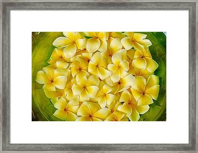 Plumerias In Bowl Framed Print