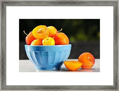 Plums In Bowl Framed Print by Elena Elisseeva