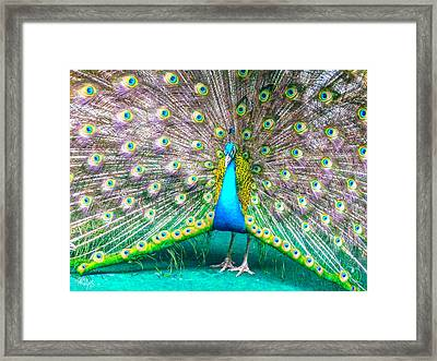 Plush And Proud Framed Print by Allan Rufus