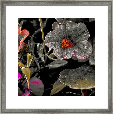 Framed Print featuring the photograph Pocket Of Orange by Thom Zehrfeld