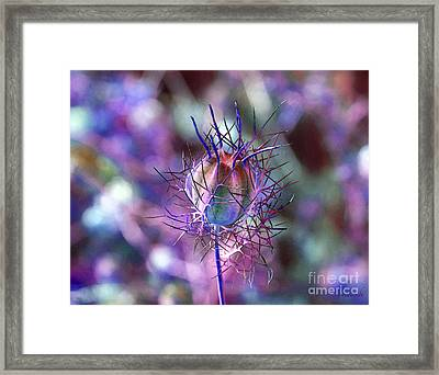Framed Print featuring the photograph Pod Play by Gwyn Newcombe