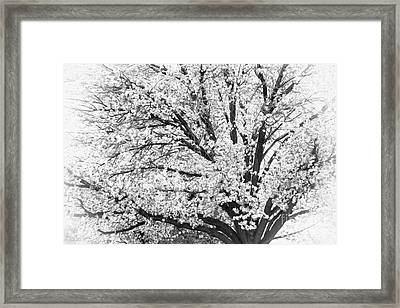 Framed Print featuring the photograph Poetry Tree by Roselynne Broussard