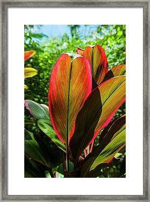 Pohnpei, Micronesia, Central Pacific Framed Print by Michael Runkel