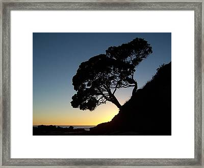 Pohutukawa Trees At Sunrise Framed Print