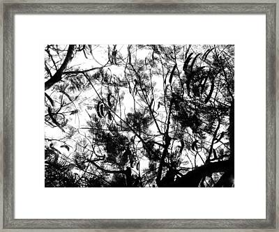Framed Print featuring the photograph Poinciana Lace by Amar Sheow