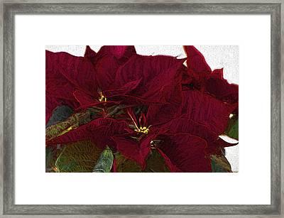 Poinsettia 3 Digital Painting On Canvas 2 Framed Print by Sharon Talson