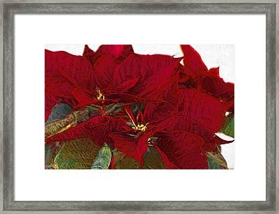 Poinsettia 3 Digital Painting On Canvas 2a Framed Print by Sharon Talson
