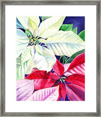 Poinsettia Christmas Collection Framed Print by Irina Sztukowski