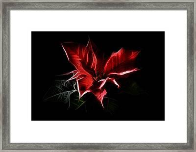 Poinsettia - Christmas Flower Framed Print by Gynt