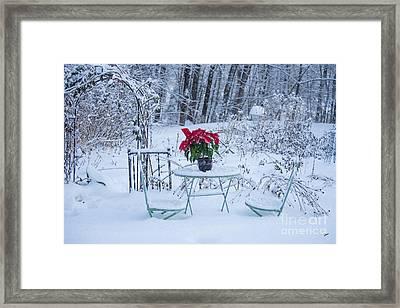 Poinsettia In The Snow Framed Print by Alana Ranney
