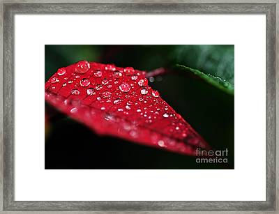 Poinsettia Leaf With Water Droplets Framed Print by Kaye Menner