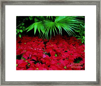 Framed Print featuring the photograph Poinsettias And Palm by Tom Brickhouse