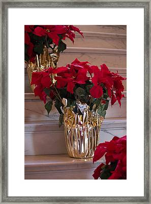 Poinsettias Framed Print by Patricia Babbitt