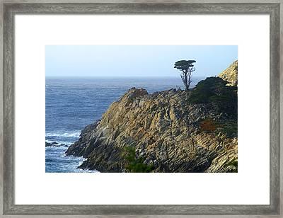 Point Lobos Cypress Framed Print