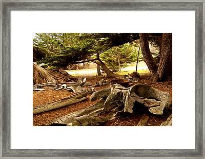 Point Lobos Whalers Cove Whale Bones Framed Print by Barbara Snyder