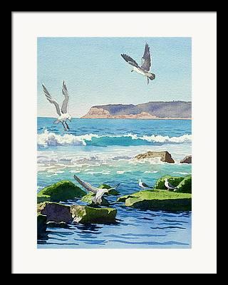 Seagull Framed Prints