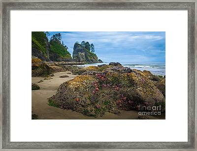 Point Of The Arches Beach Framed Print by Inge Johnsson